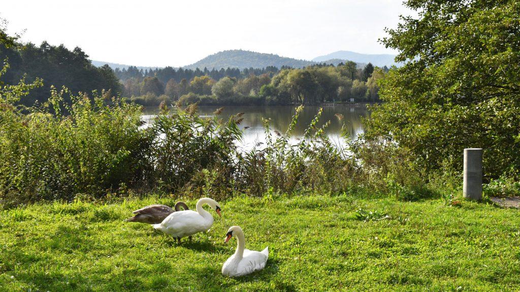 Koseze Pond