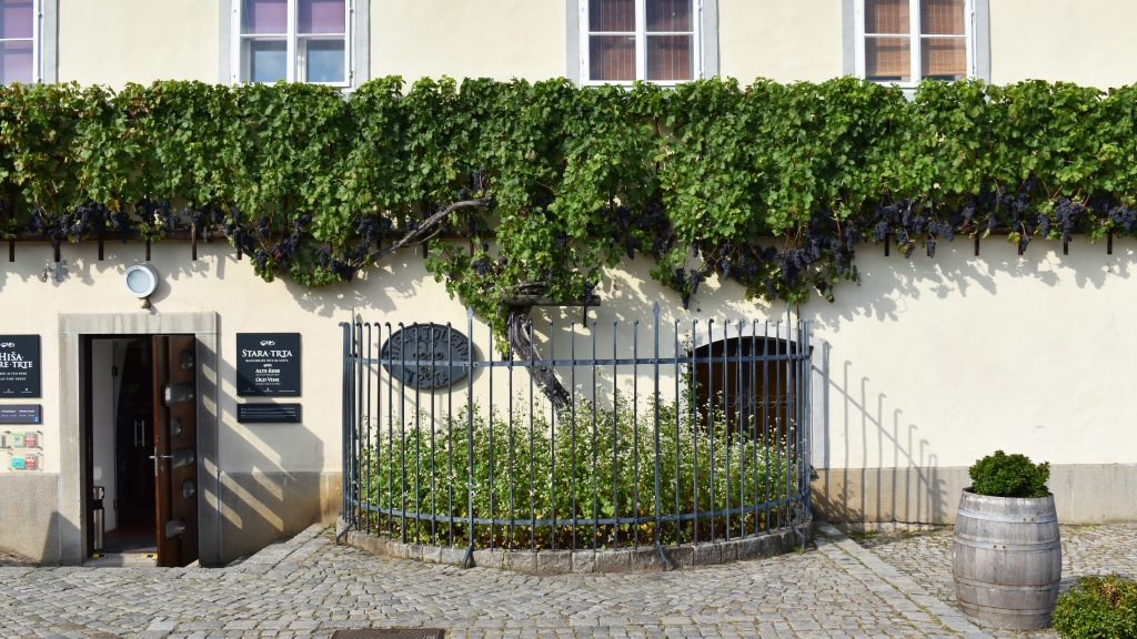 Old Wine Maribor, Slovenia