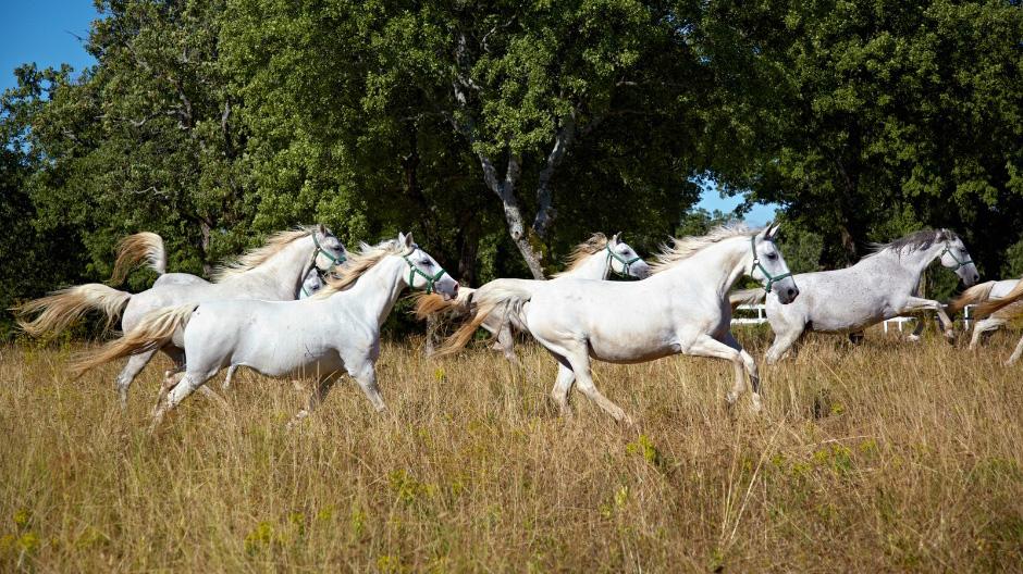 Horsefarm Lipica, Slovenia